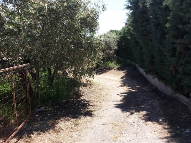 (For Sale) Land Agricultural Land  || Kavala/Eleftheres - 3.600 Sq.m, 260.000€