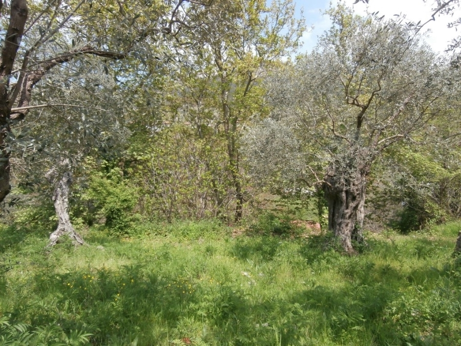 (For Sale) Land Plot || Kavala/Thasos - 480 Sq.m, 30.000€