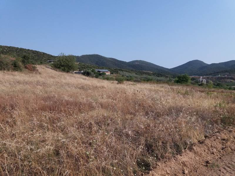 (For Sale) Land Agricultural Land  || Kavala/Eleftheres - 4.325 Sq.m, 50.000€