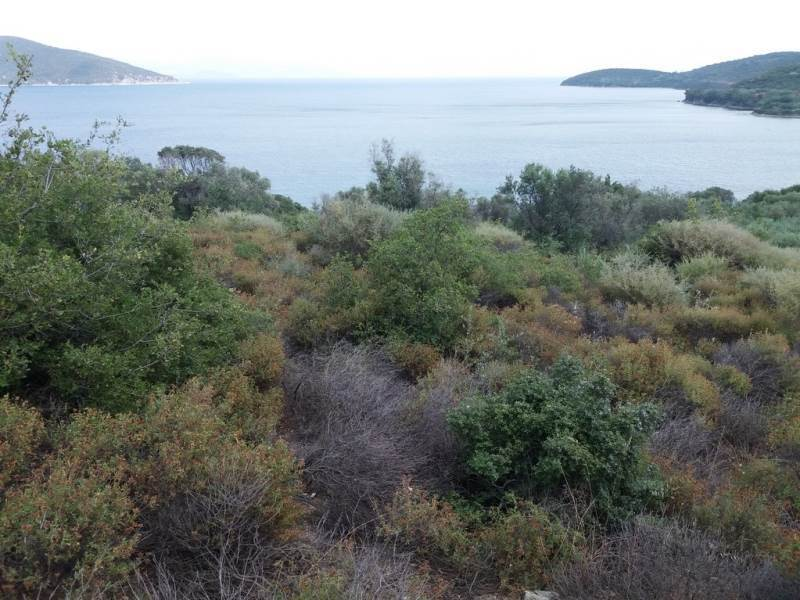(For Sale) Land Agricultural Land  || Kavala/Eleftheres - 10.000 Sq.m, 300.000€